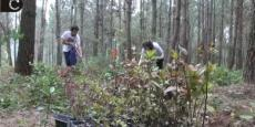 Embedded thumbnail for Semana do Ambiente | Open Day - Parque Natural Sintra-Cascais