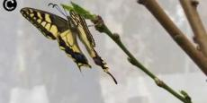 Embedded thumbnail for Borboletário - Dia da Biodiversidade